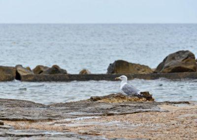 ptice1