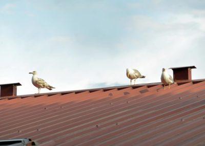 ptice13