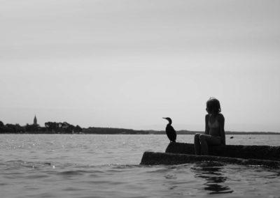Morske ptice, Pineta 2017