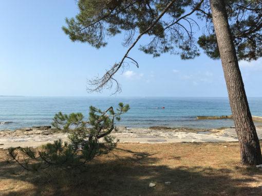 Plaža Pineta